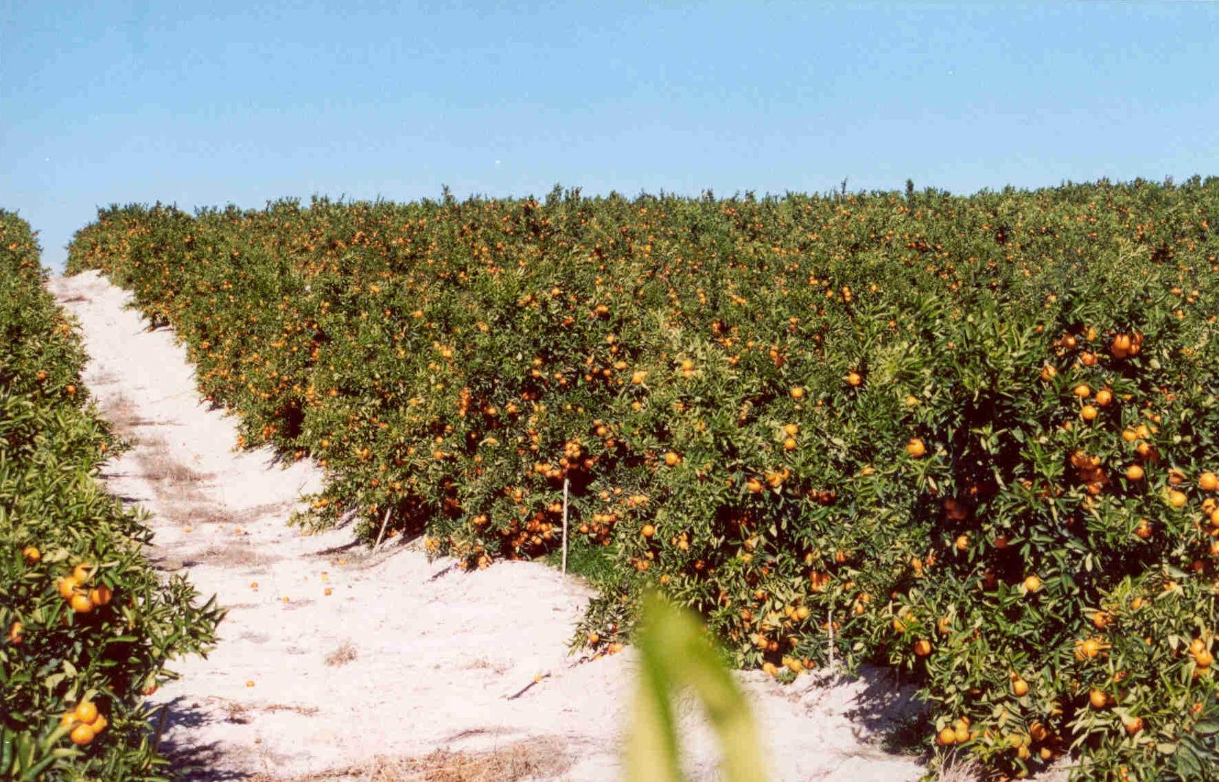 Bienvenidos a Clementinas de la Plana